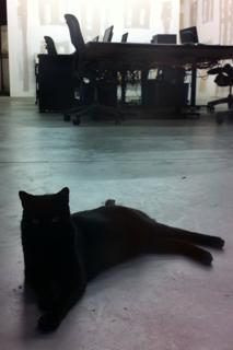 חתול במשרד