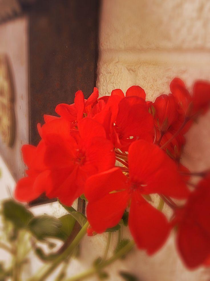 פרחים אדומים 1